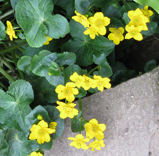 Flowers at Hidcote. Ellie Stevenson images